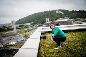 hanna på grønt tak