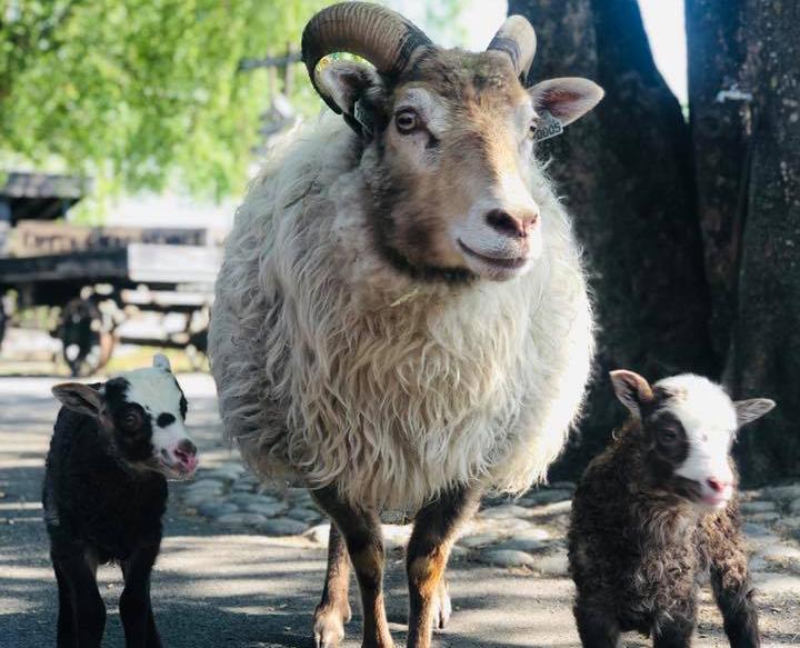 Kampen Økologiske Barnebondegård er viktig for dyrevelferden, mener Teodor Bruu i Gamle Oslo MDG